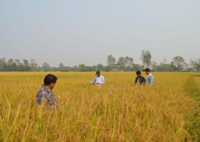 Survey: Crop Cutting Measurement (2015)