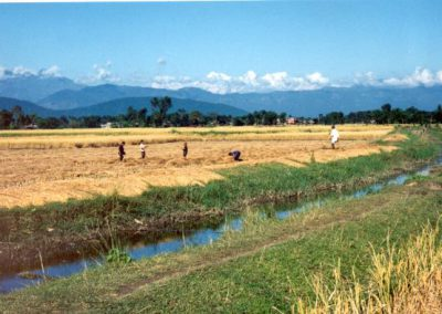 Agriculture: Rice Harvesting (2015)